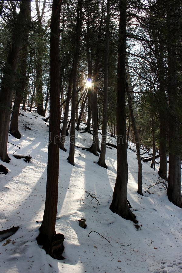 Escena selv?tica con nieve recientemente caida y luz del sol que fluye a trav?s de ?rboles a lo largo de una trayectoria de los c imágenes de archivo libres de regalías