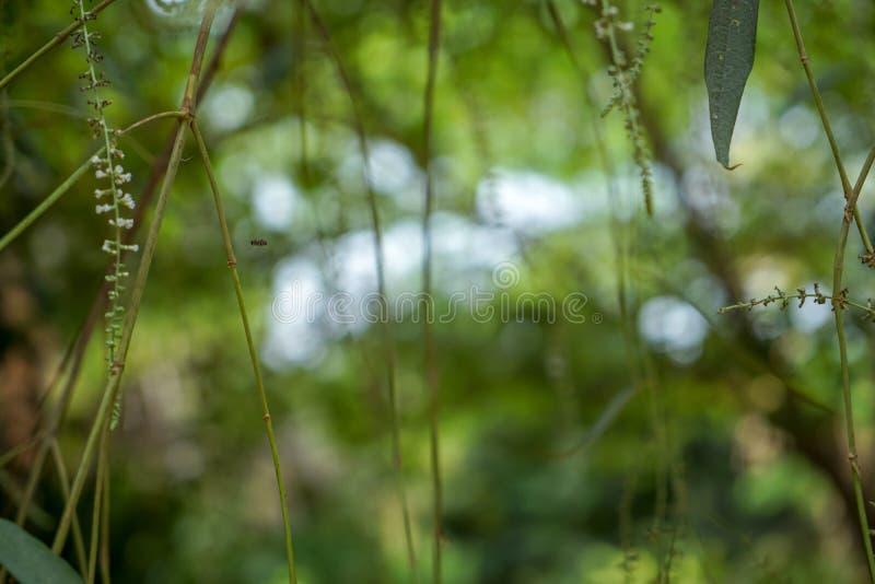 Escena soñadora de las hojas del verde y del fondo naturales defocused hermosos del bokeh de la luz blanca con las ramas y la flo fotografía de archivo libre de regalías