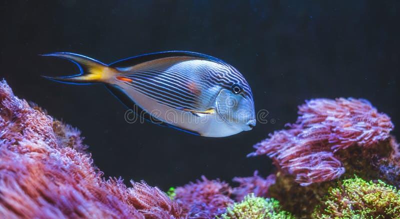 Escena subacuática de los pescados tropicales imagen de archivo libre de regalías