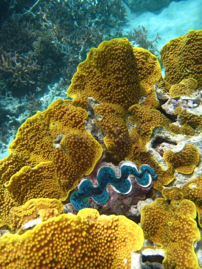 Escena subacuática del gran filón de barrera foto de archivo libre de regalías