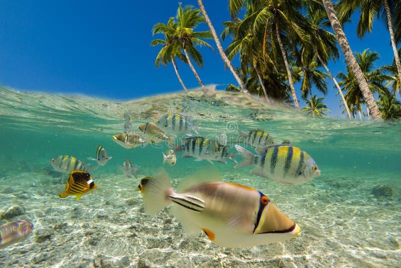 Escena subacu?tica con el fil?n y los pescados tropicales foto de archivo libre de regalías
