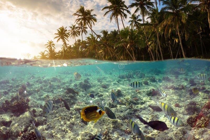 Escena subacu?tica con el fil?n y los pescados tropicales imágenes de archivo libres de regalías