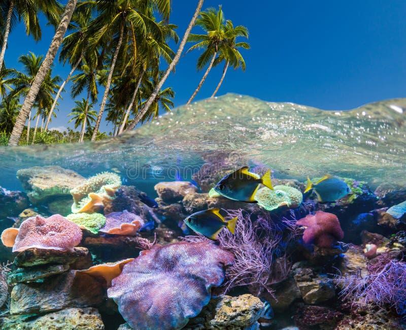 Escena subacu?tica con el fil?n y los pescados tropicales fotos de archivo