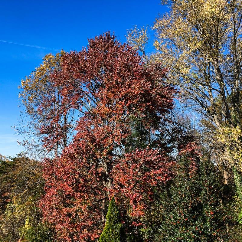 Escena temprana preciosa del otoño en Charlottesville, Virginia imagen de archivo