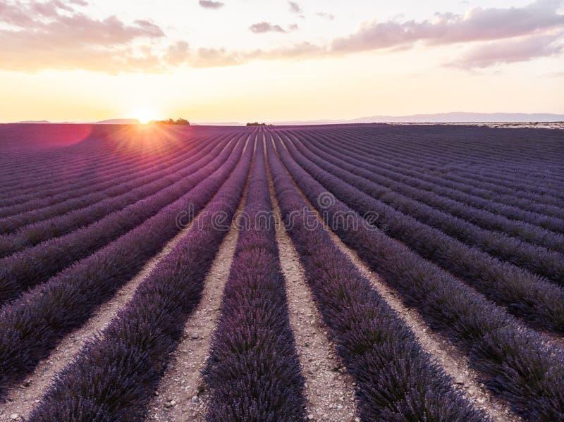 escena tranquila con el campo hermoso de la lavanda en la puesta del sol foto de archivo