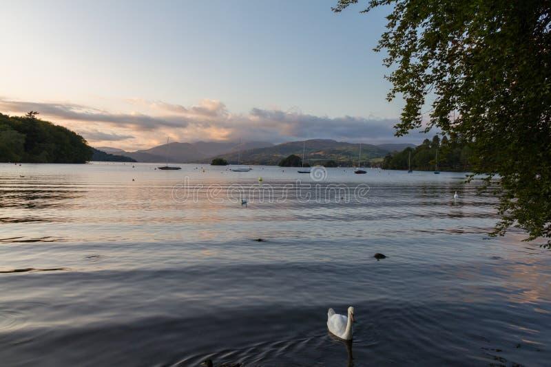 Escena tranquila de la oscuridad del lago Windermere con un cisne mudo en el frente imágenes de archivo libres de regalías