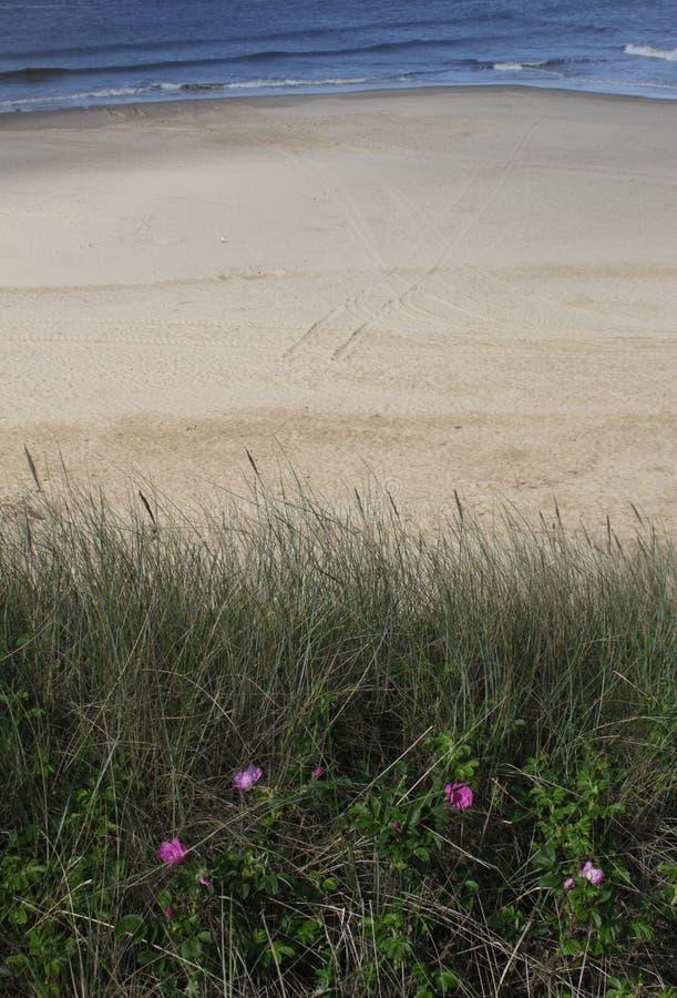 Escena tranquila de la playa con las flores rosadas foto de archivo libre de regalías