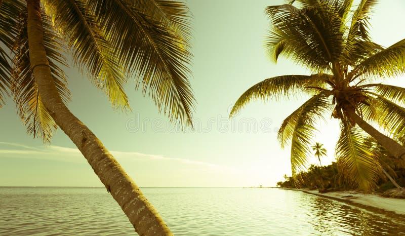 Escena tropical de la playa del vintage foto de archivo libre de regalías