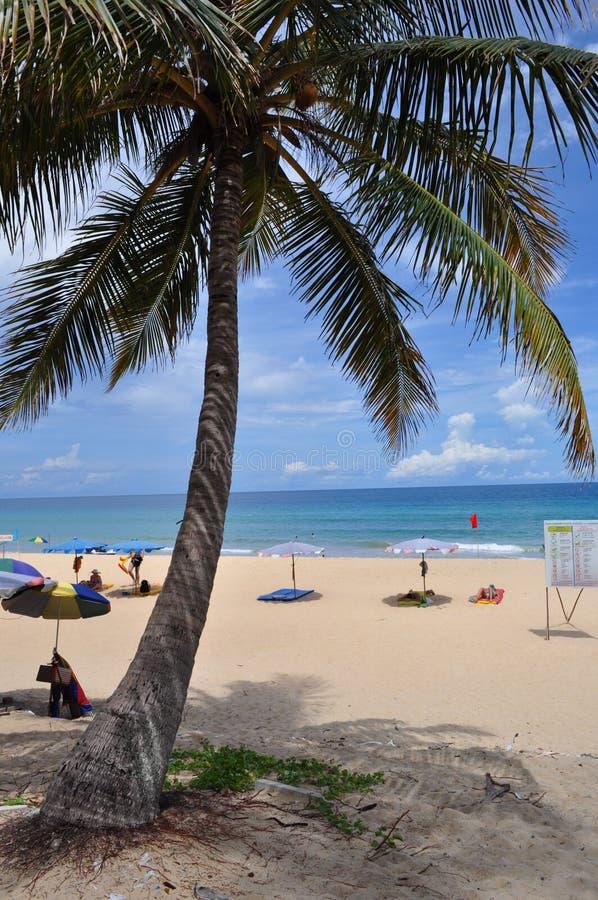 Escena tropical Phuket Tailandia de la palmera y de la playa imagen de archivo libre de regalías