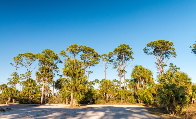 Escenario del Caribe hermoso Sombras de la madera de pino y del árbol en la oscuridad imagen de archivo libre de regalías