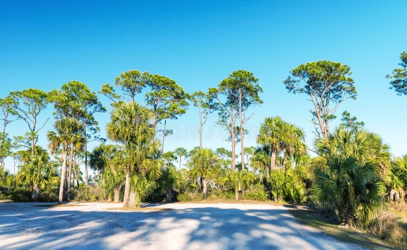 Escenario del Caribe hermoso Sombras de la madera de pino y del árbol en la oscuridad fotografía de archivo