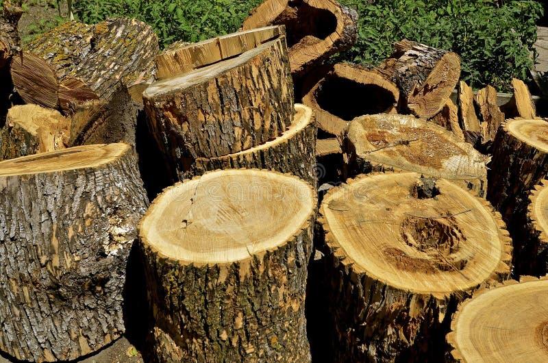 Esche schnitt in Abschnitte für zukünftiges Brennholz stockfotos