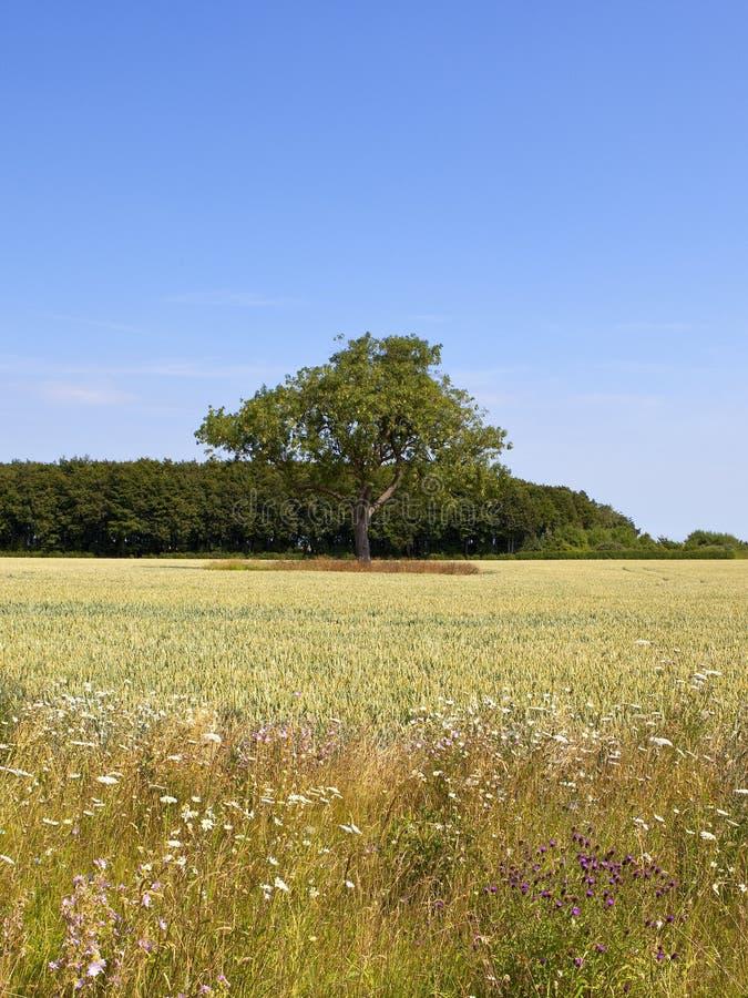 Esche- und Weizenernte mit Sommer Wildflowers stockbilder