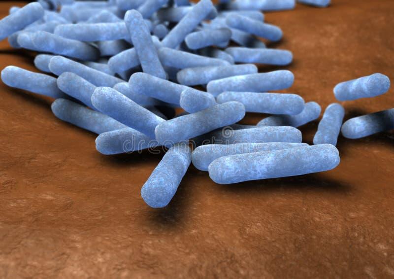 Escherichia coli illustration de vecteur