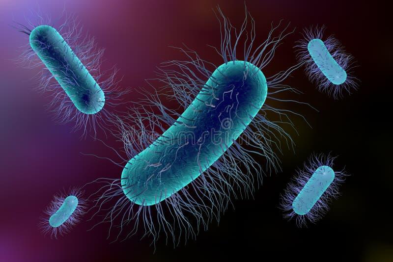 Escherichia Coli bakteria royalty ilustracja