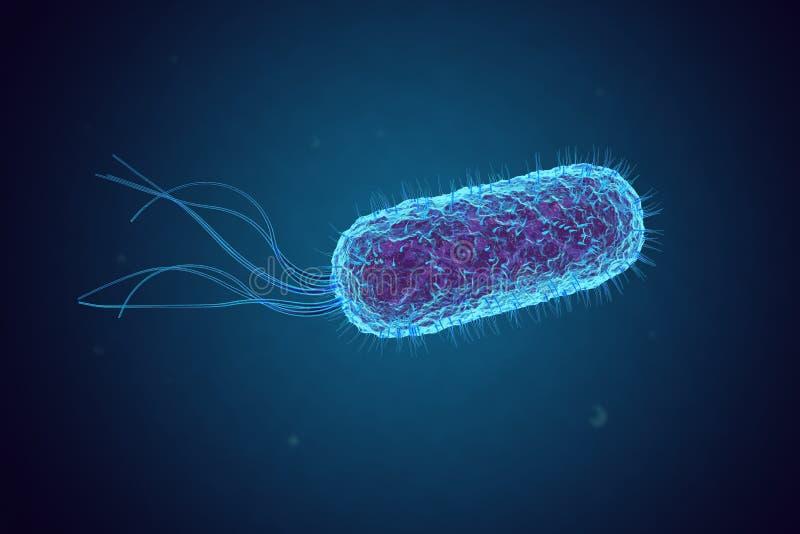 Escherichia coli E coli Batteri sotto il microscopio illustrazione di stock