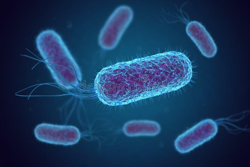 Escherichia coli E coli Cellules de bact?ries sous le microscope illustration libre de droits
