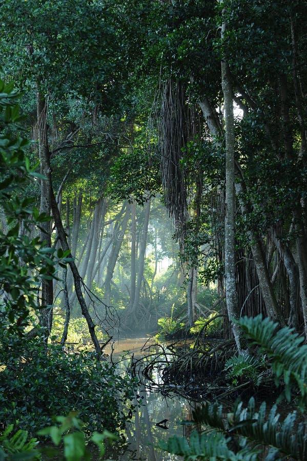 Esclarecimento tropical da floresta da selva fotografia de stock