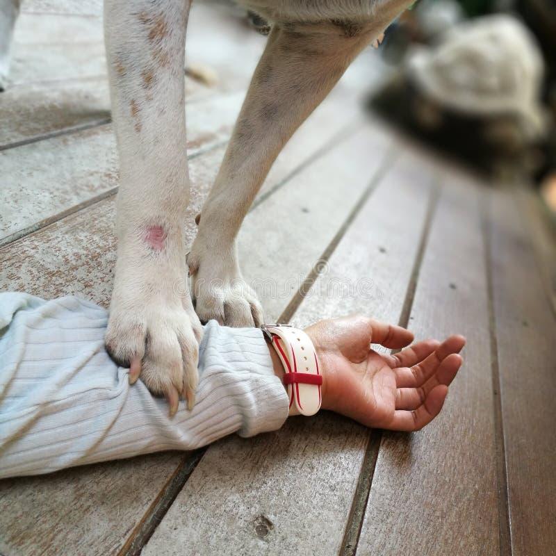 Esclavo del perro fotografía de archivo