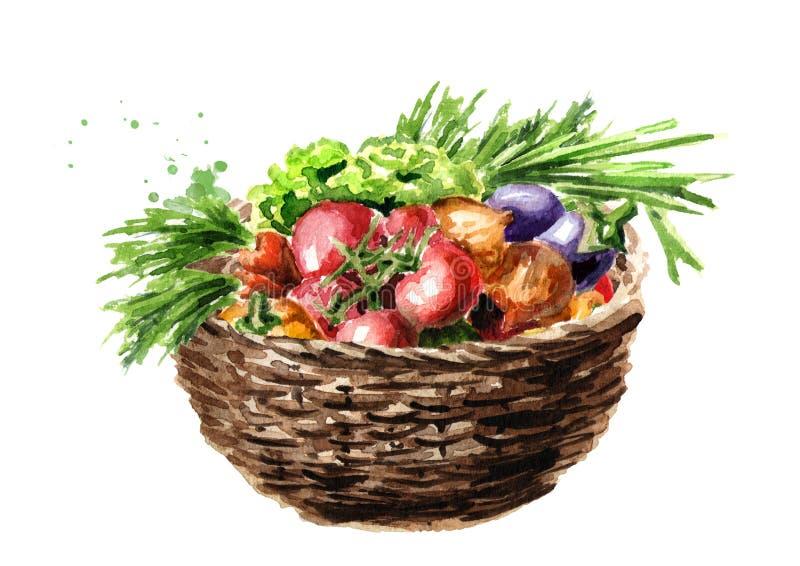Escogió recientemente verduras en cesta Ejemplo dibujado mano de la acuarela, aislado en el fondo blanco stock de ilustración