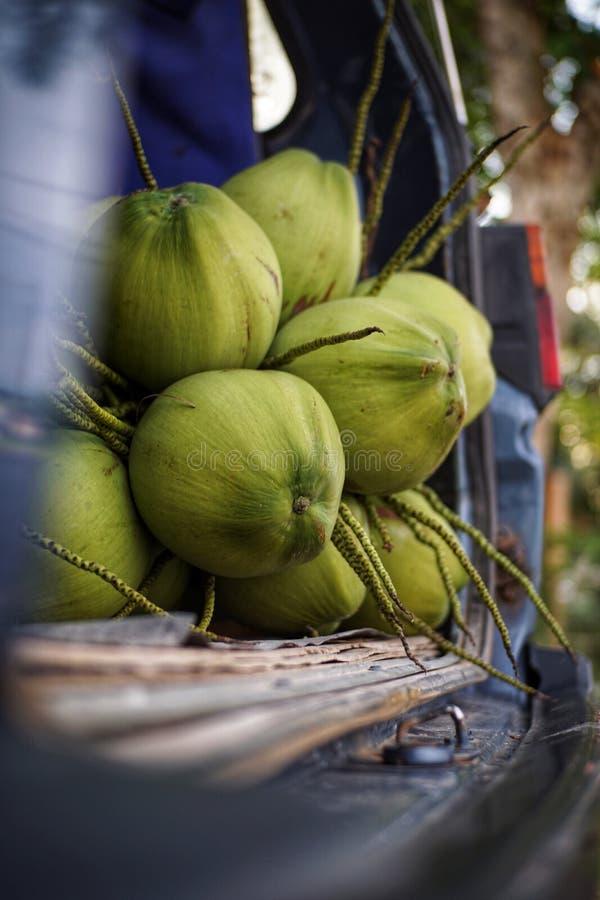 Escogiendo el coco con el papá al aire libre fotografía de archivo libre de regalías