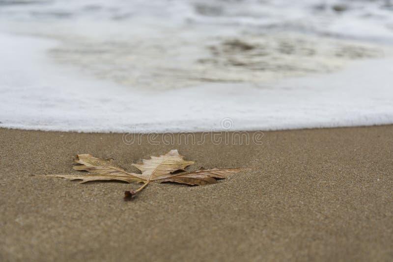 Escoja la licencia en la playa imágenes de archivo libres de regalías