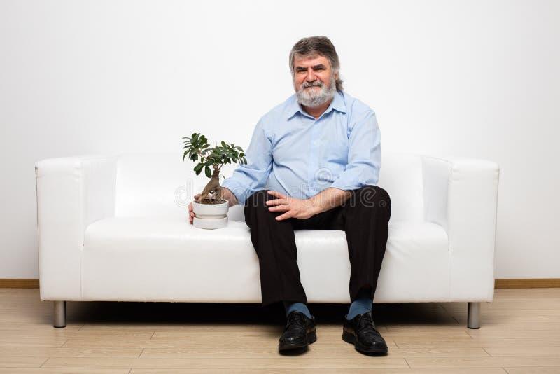 Escoja a los viejos hombres en el sofá blanco con un bonsai fotografía de archivo libre de regalías