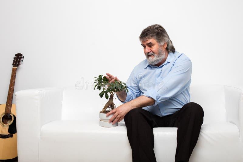 Escoja a los viejos hombres en el sofá blanco con un bonsai fotos de archivo