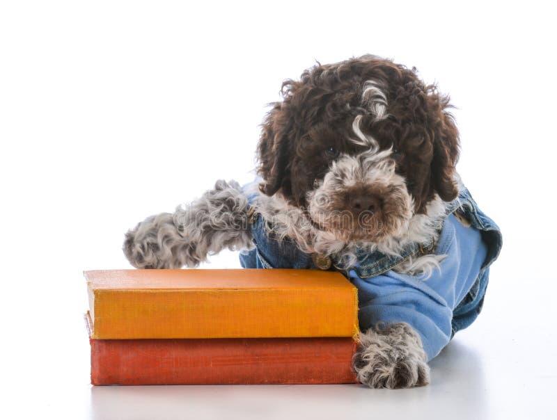 Escola da obediência do cão fotografia de stock royalty free