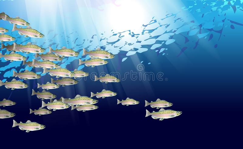 Escola de peixes salmon cor-de-rosa Vida marinha Ilustração do vetor aperfeiçoada de para ser usado no projeto do fundo, decoraçã fotos de stock