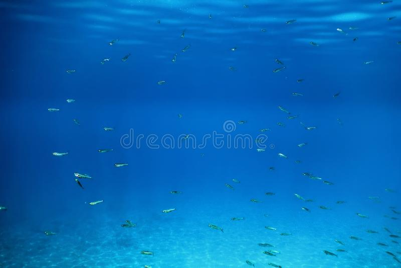 Escola de Pesca Nadando sobre areia Fundo no Mar Tropical fotografia de stock
