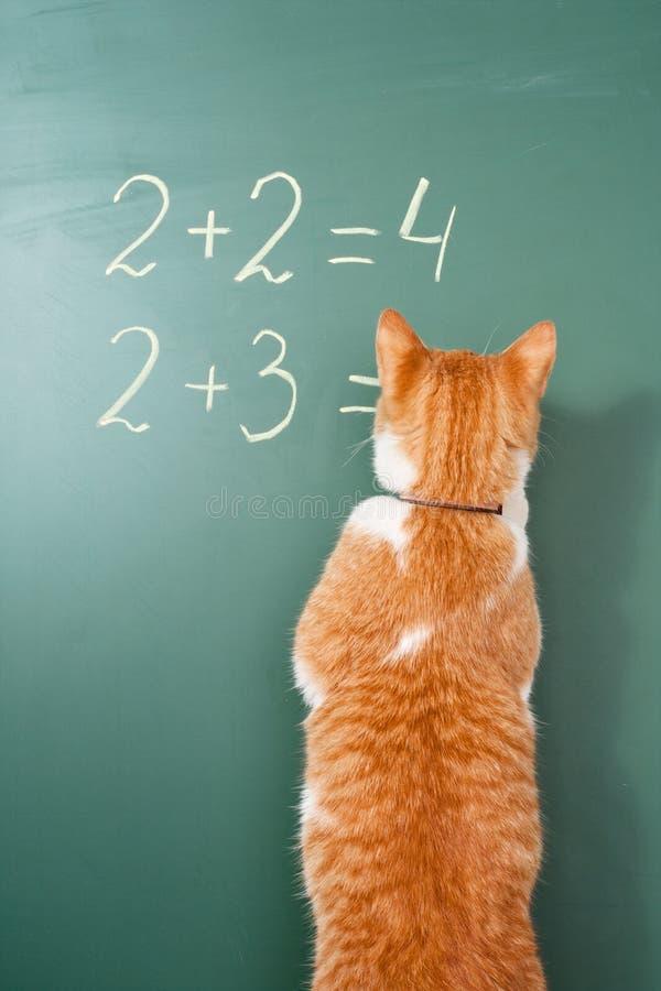 Escola do gato fotos de stock
