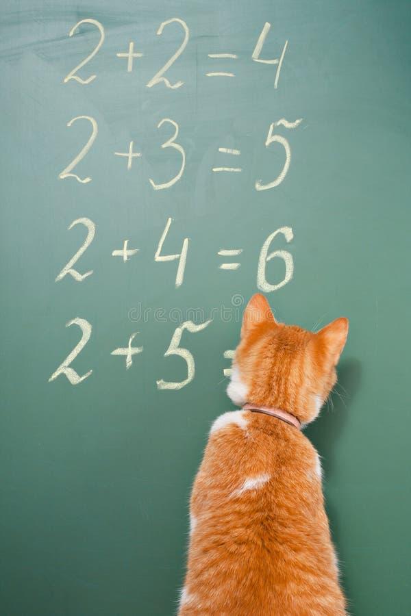 Escola do gato foto de stock