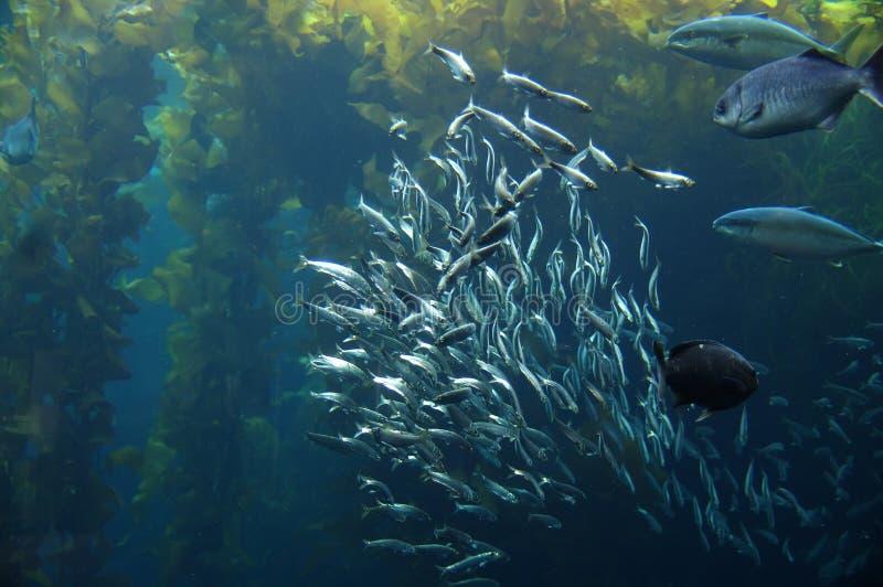 Escola dos peixes imagem de stock