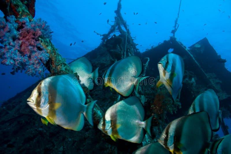 Escola dos peixes imagens de stock