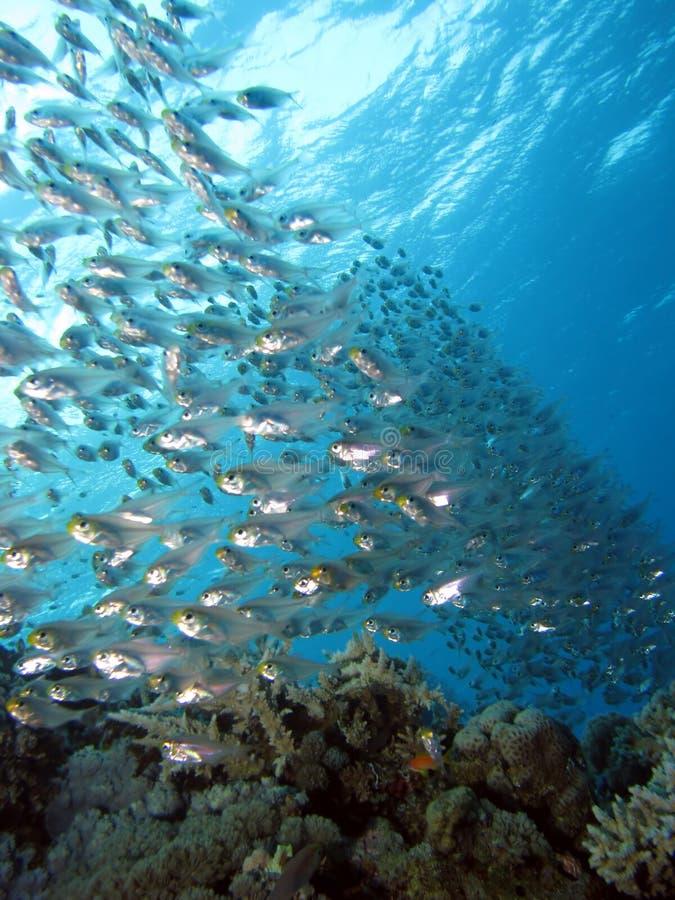 Escola dos peixes de vidro imagem de stock royalty free