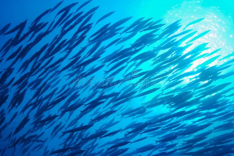 Escola dos peixes subaquáticos imagens de stock royalty free