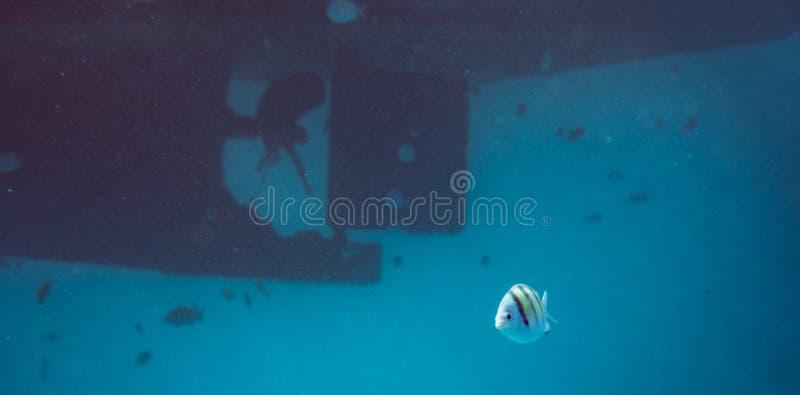 Escola dos peixes subaquáticos sobre a hélice e o leme do barco em uma grande embarcação imagens de stock