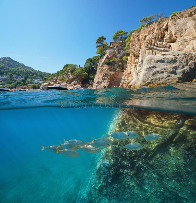 Escola rochosa da costa do mar Mediterrâneo da Espanha dos peixes imagens de stock