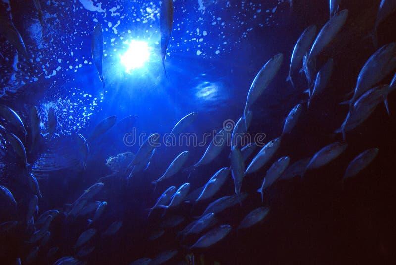 Escola subaquática da vista dos peixes imagem de stock