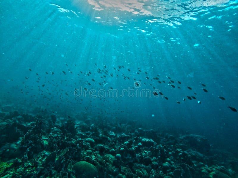 Escolas dos peixes no oceano de Curaçau foto de stock royalty free