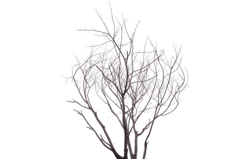 Escolha a árvore velha e inoperante isolada no fundo branco fotos de stock