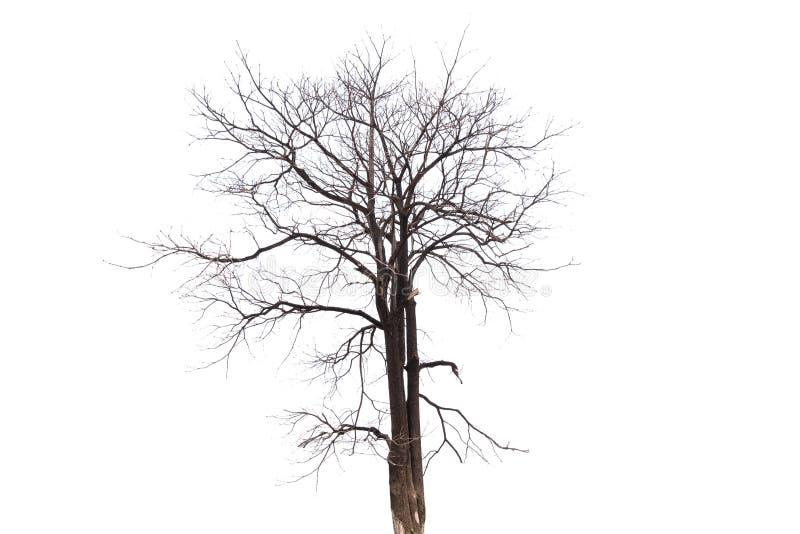 Escolha a árvore velha e inoperante isolada no fundo branco foto de stock
