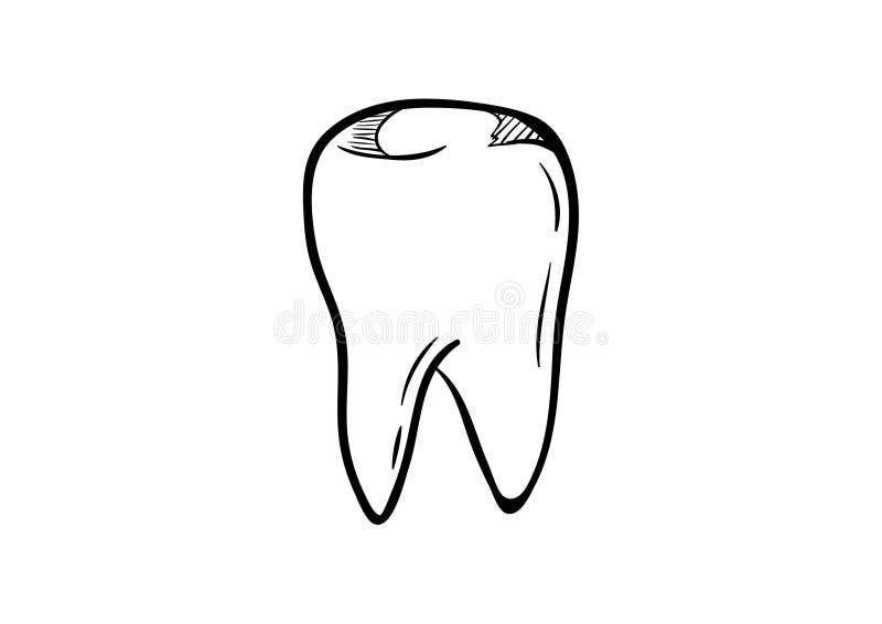 Escolha a linha contínua silhueta humana anatômica do dente da arte E ilustração royalty free