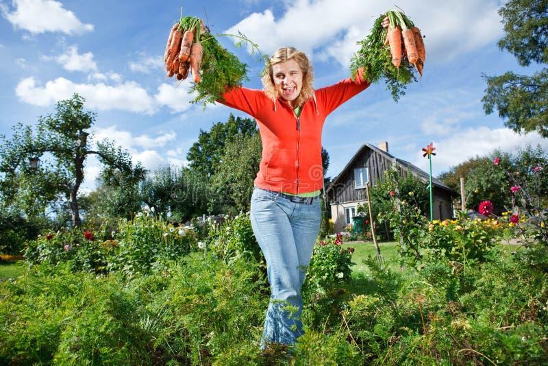 Escolhendo cenouras orgânicas fotografia de stock royalty free