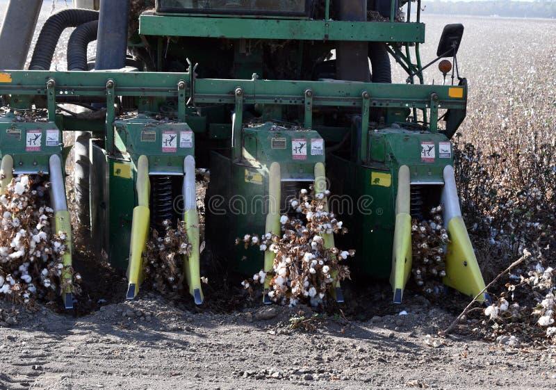 Escolhendo o algodão com uma máquina desbastadora de algodão, colhe o algodão com uma gim de algodão foto de stock royalty free