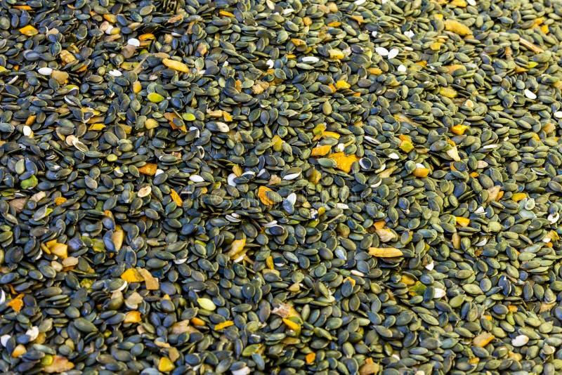 escolhendo sementes de ab?bora imagens de stock