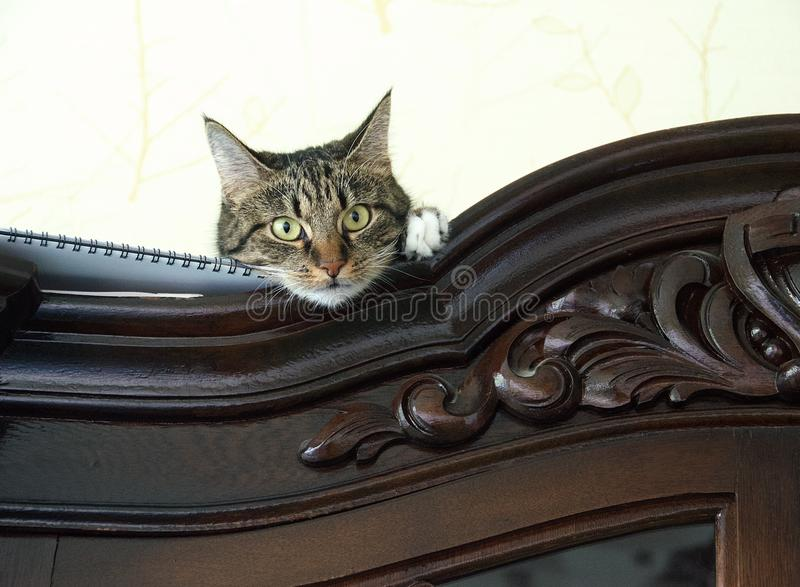 Esconder ascendente próximo do gato em um armário que olha o visor com espaço para anunciar, foto artística do gatinho brincalhão imagens de stock royalty free