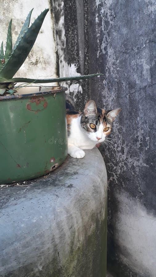 Escondido de Gato photos stock