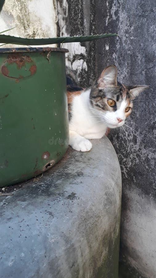 Escondido de Gato photos libres de droits